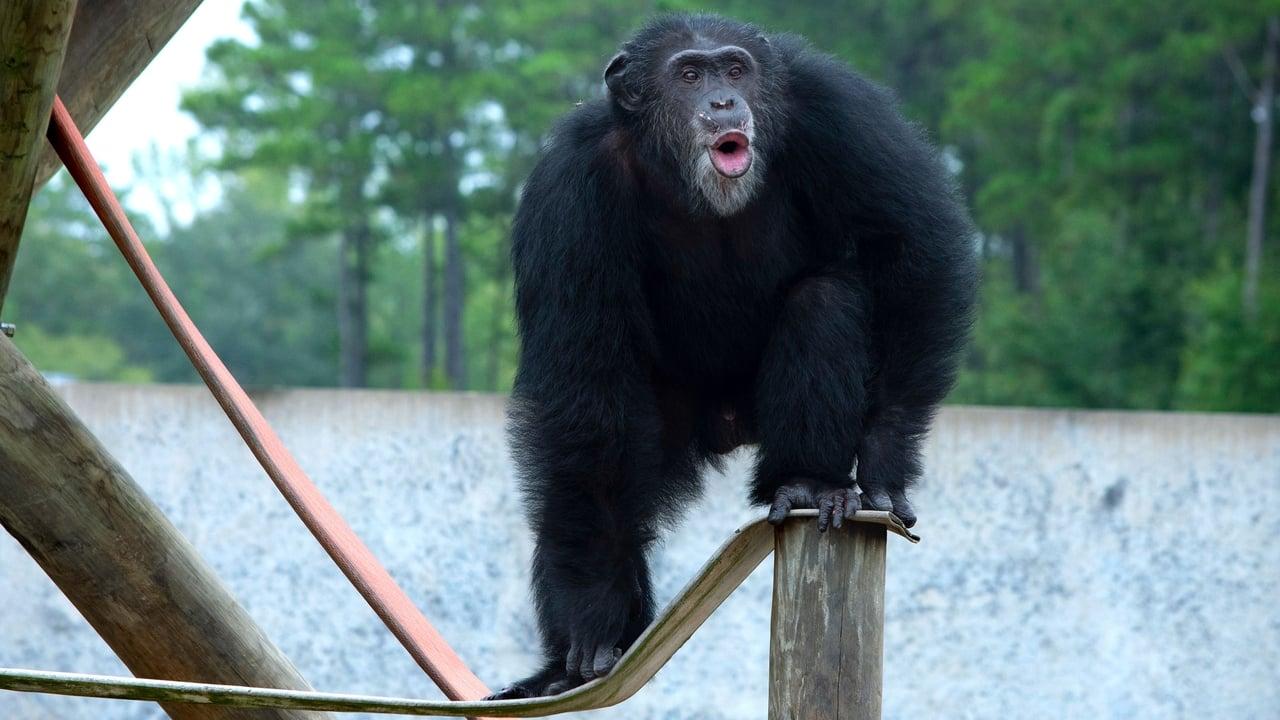 Meet the Chimps Episode: Episode 3