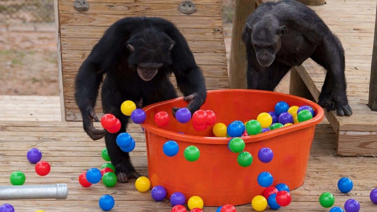 Meet the Chimps Episode: Episode 6