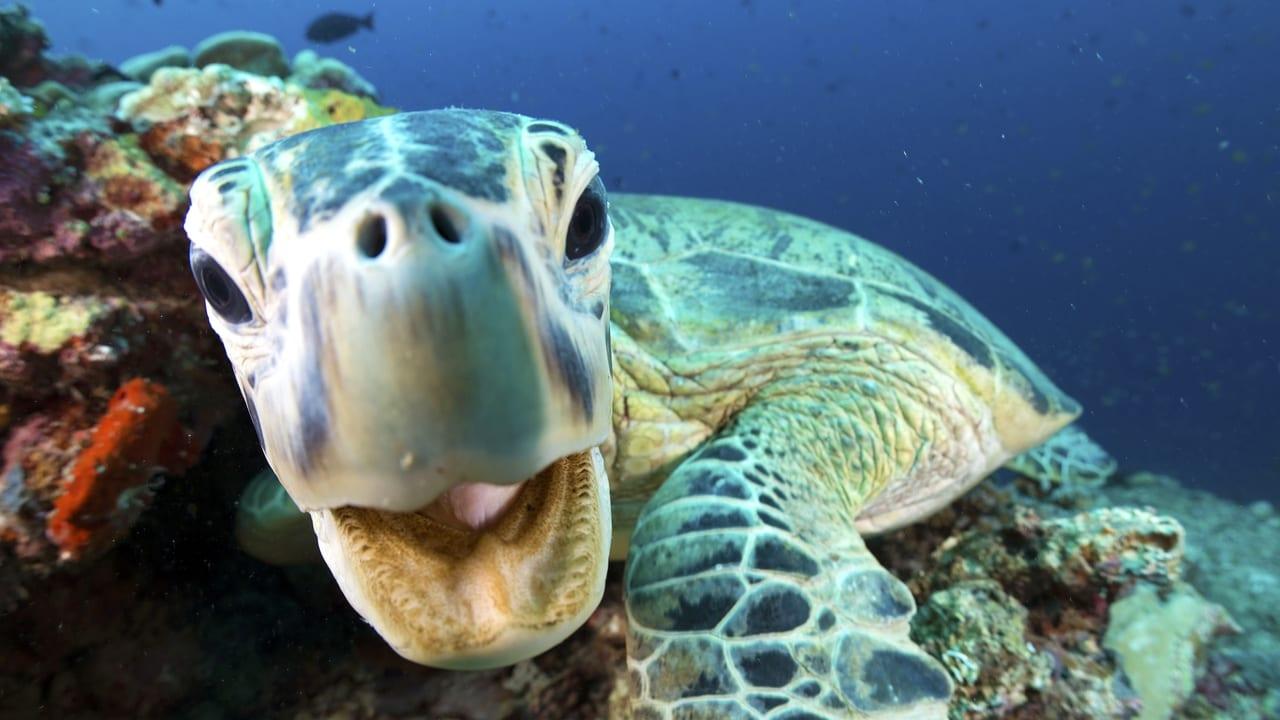 Blue Planet II Episode: Coral Reefs