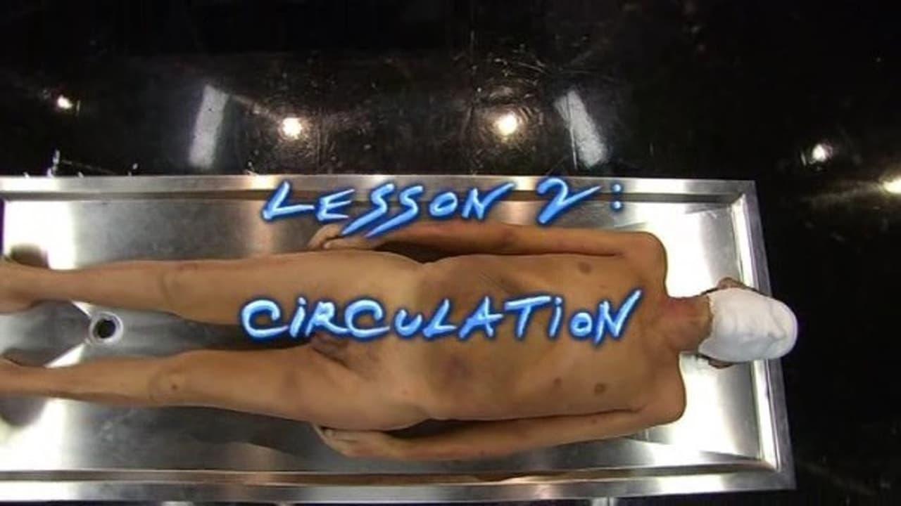 Anatomy for Beginners Episode: Circulation