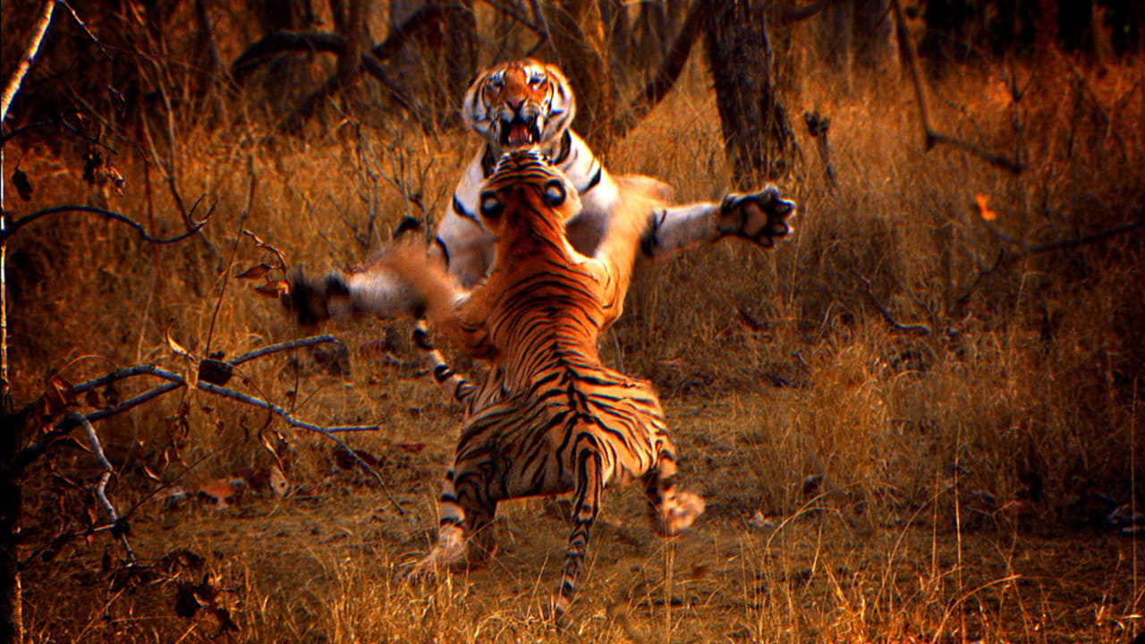 Tiger Spy In The Jungle Episode: Episode 2