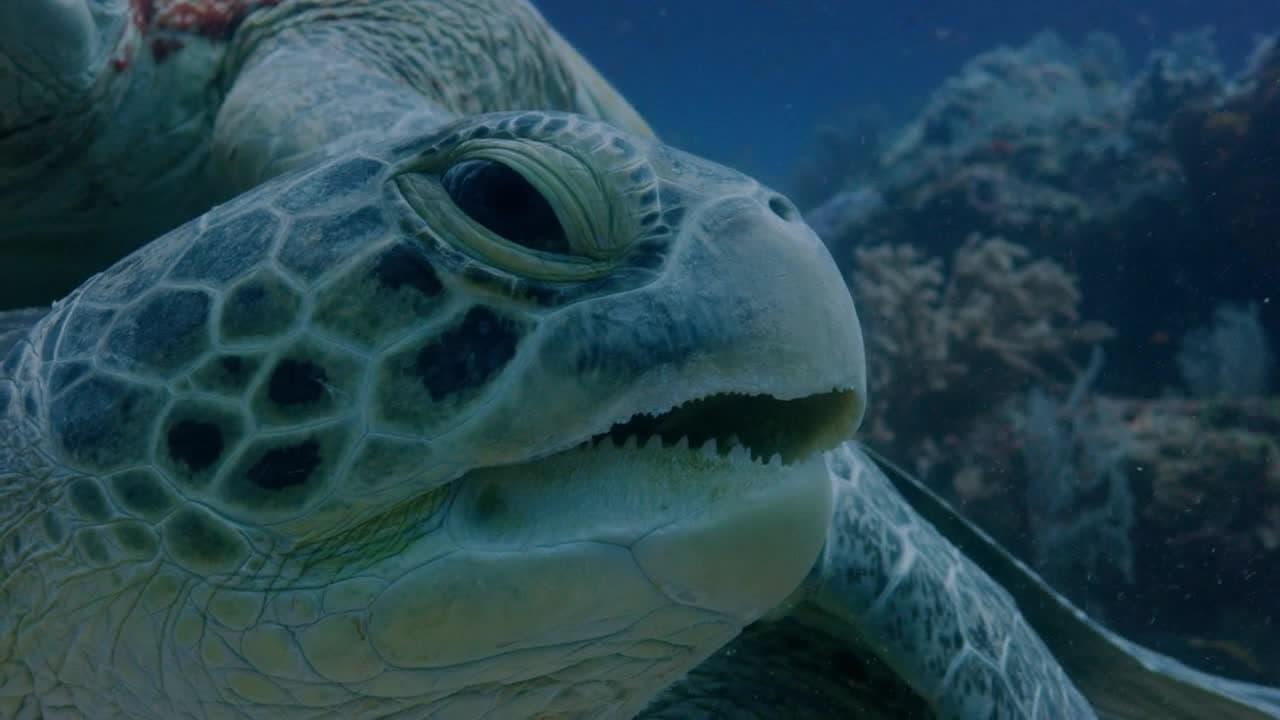 Hostile Planet Episode: Oceans