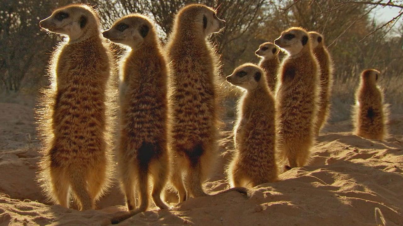 Africa Episode: Kalahari