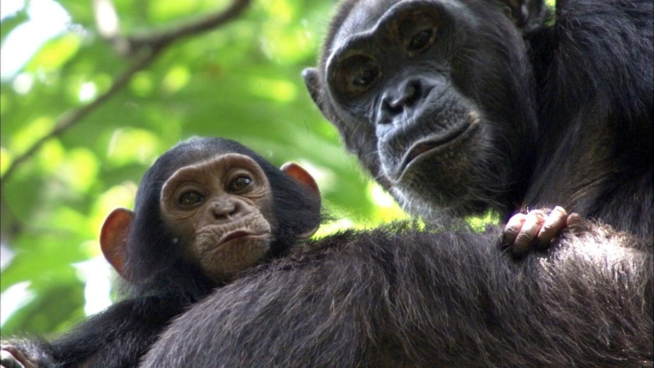 Africa Episode: Congo
