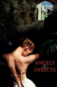Streaming sources for Angels and Insects