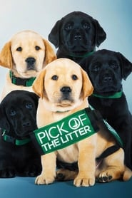 Streaming sources for Pick of the Litter