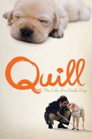 Streaming sources for Quill  The Life of a Guide Dog