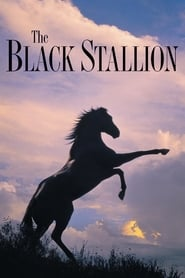 Streaming sources for The Black Stallion