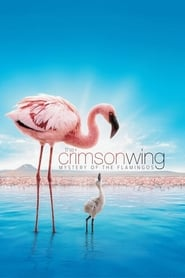 Streaming sources for The Crimson Wing Mystery of the Flamingos