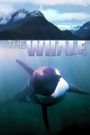 Streaming sources for The Whale