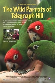 Streaming sources for The Wild Parrots of Telegraph Hill