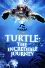 Streaming sources for Turtle The Incredible Journey