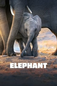 Streaming sources for Elephant