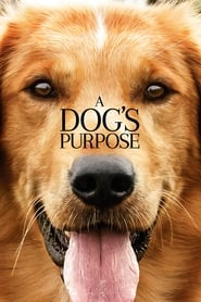 Streaming sources for A Dogs Purpose