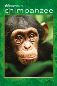 Streaming sources for Chimpanzee