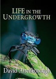 Streaming sources for Life in the Undergrowth