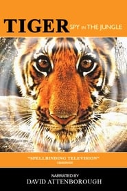 Tiger Spy In The Jungle Poster