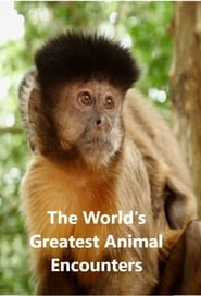 Streaming sources for Worlds Greatest Animal Encounters