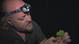 Wallaces Flying Frog  Bill Baileys Jungle Hero  Episode 1  BBC Two