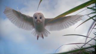 Dialanowl  Super Senses The Secret Power of Animals Episode 2  BBC Two