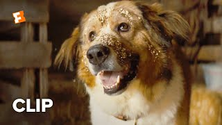 A Dogs Journey Movie Clip  Opening Scene 2019  FandangoNOW Extras