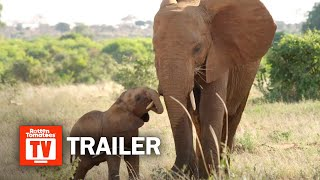 The Elephant Queen Trailer 1 2019  Rotten Tomatoes TV