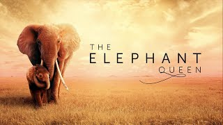 The Elephant Queen 2019 Official Trailer  Documentary