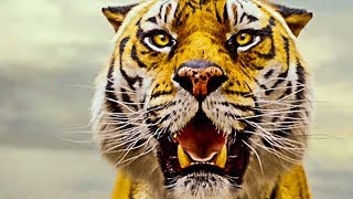 Life of Pi  Official Trailer HD